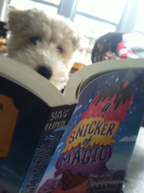 Biscuit reading Snicker