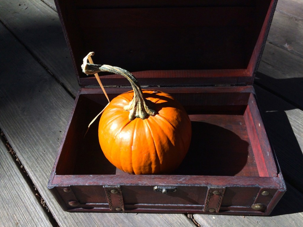 Wondering Box pumpkin
