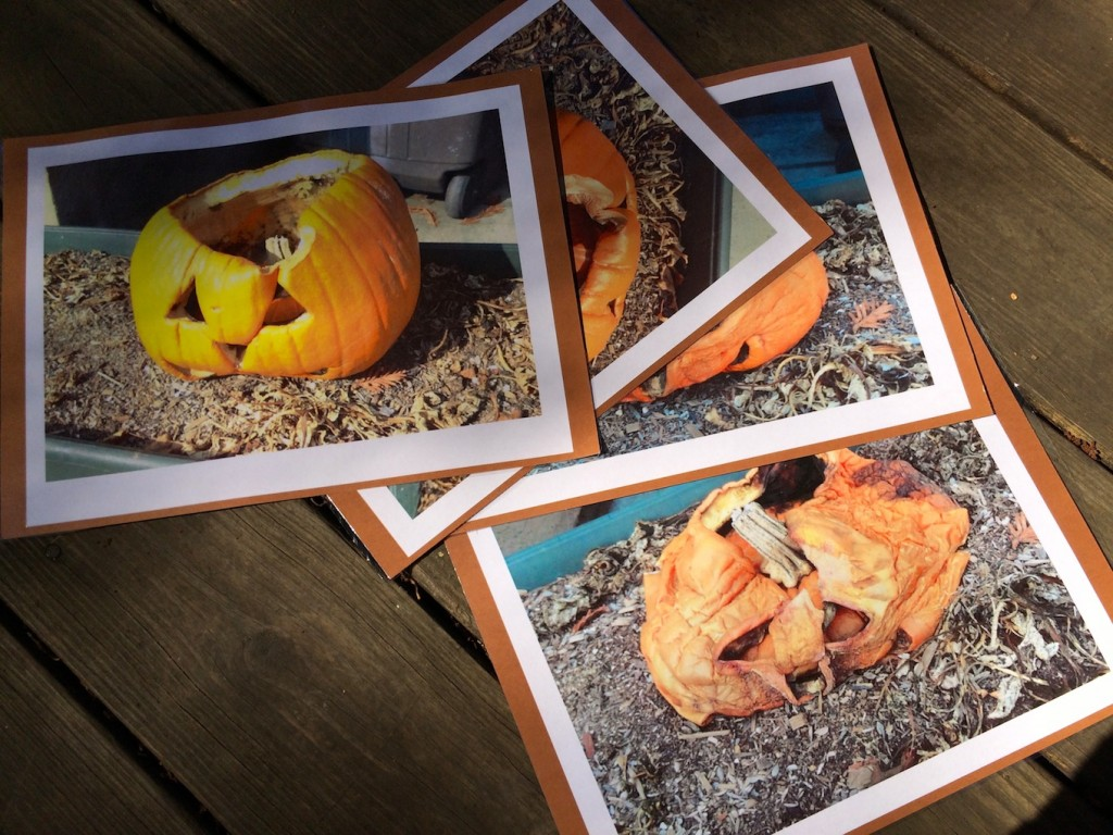 pumpkin compost cards