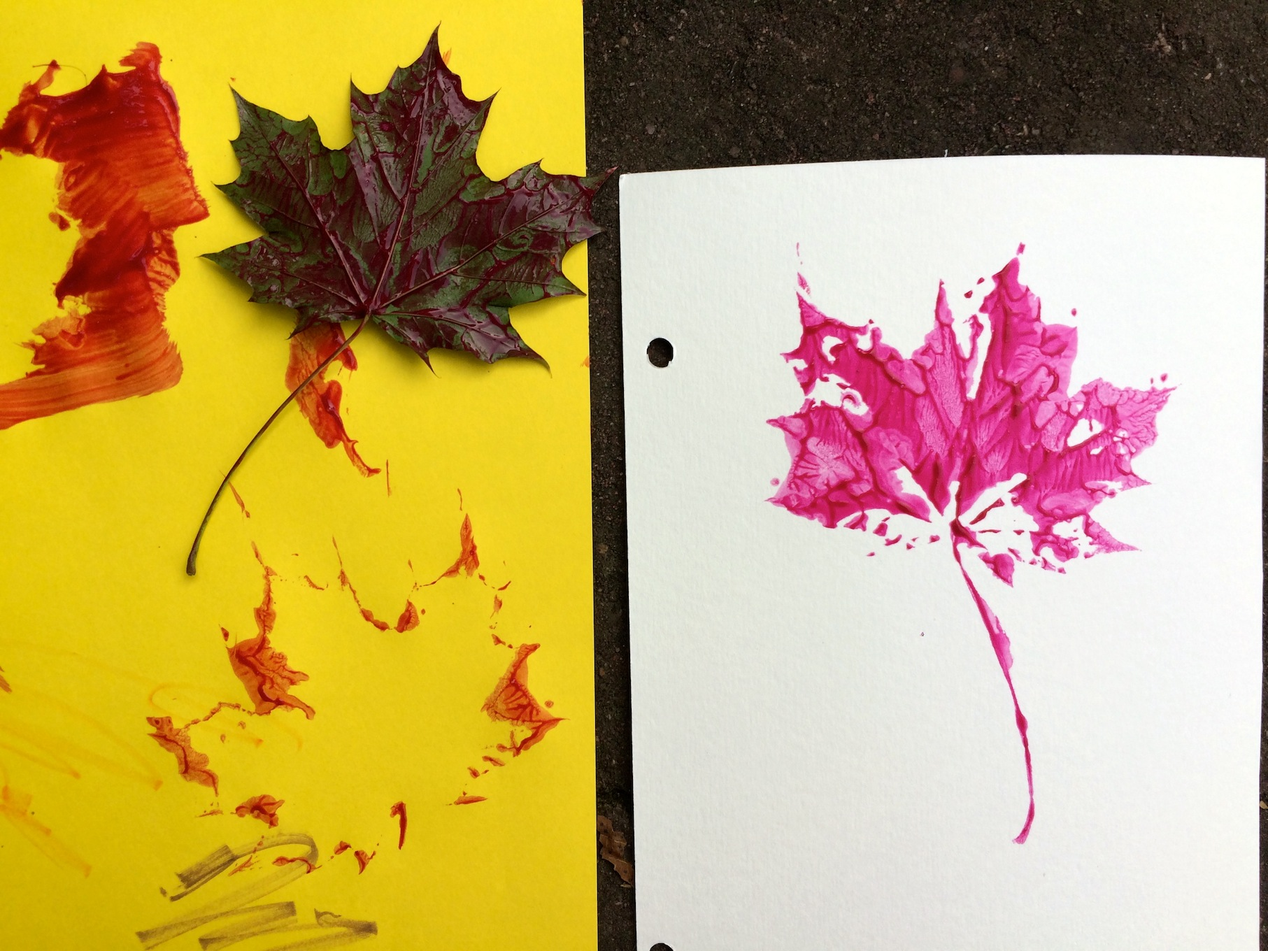 Tree Identification for Kids: My Leaf Book : Sturdy for
