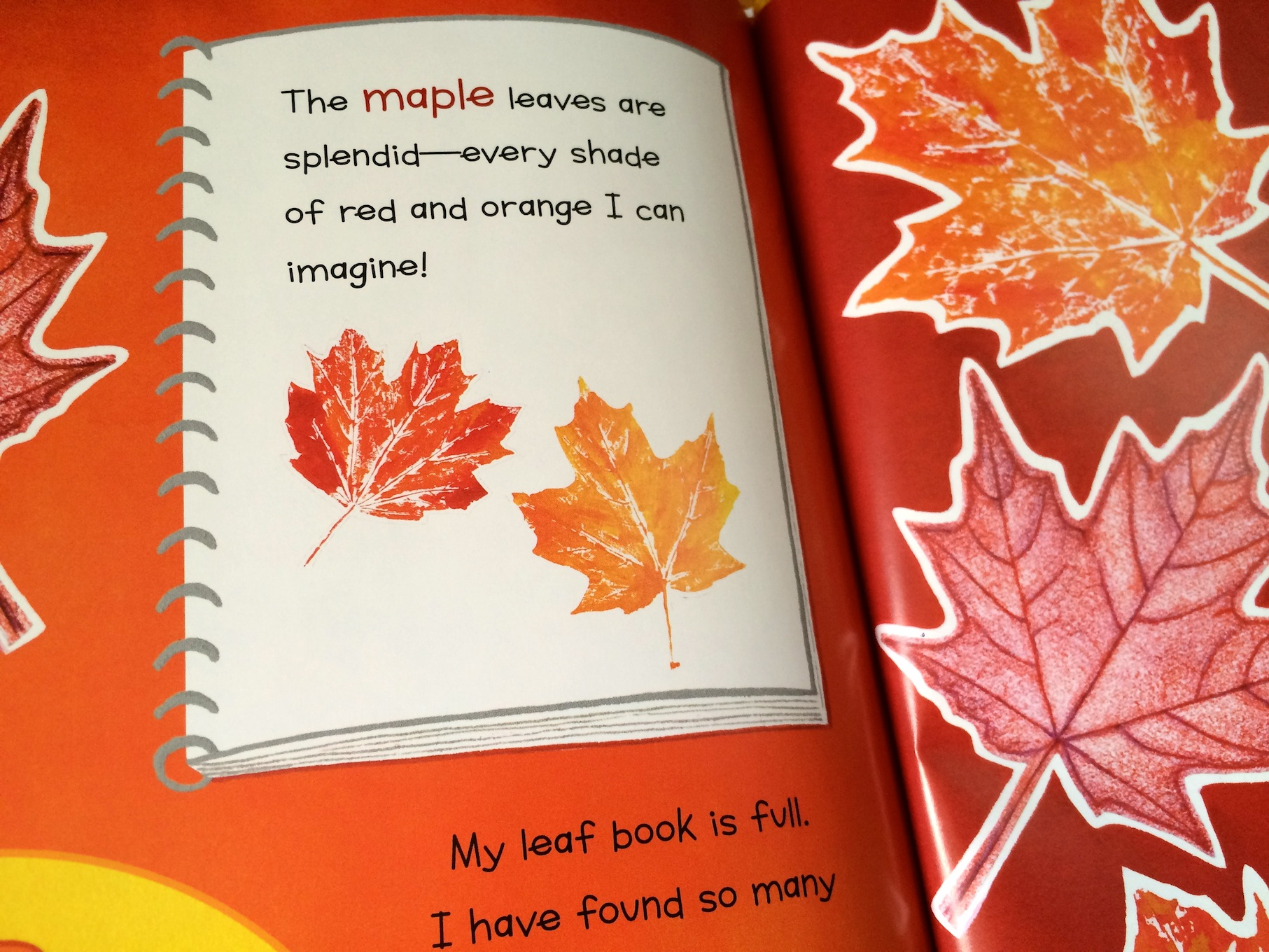Tree Identification For Kids My Leaf Book Sturdy Common Things
