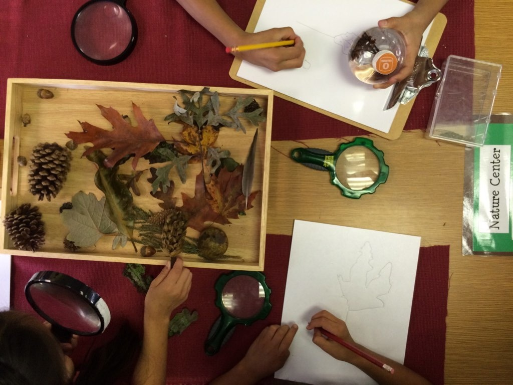 Connecting Young Children to Nature in the Library