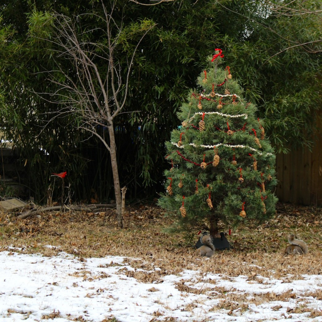 Give your christmas tree a longer life by decorating for the winter animals - The After-Christmas Tree Nature Activity via SfCT