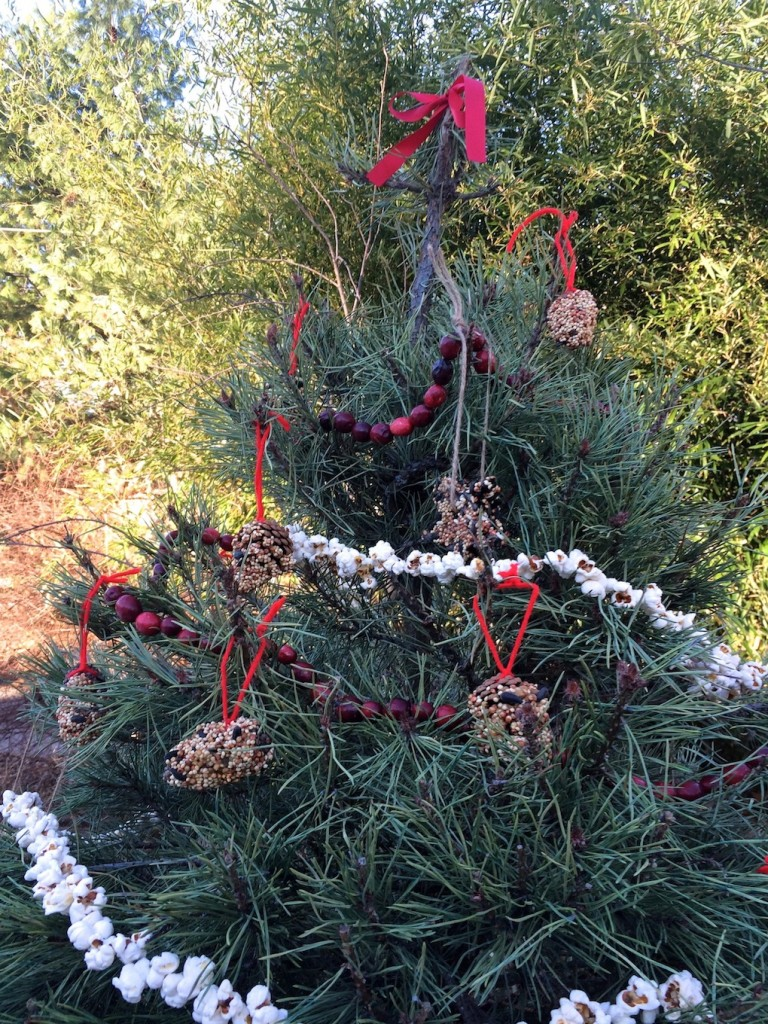 Pinecone bird feeders