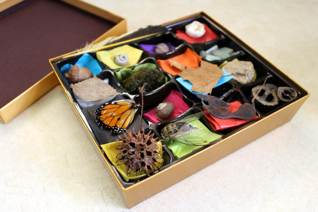 Chocolate Box Nature Collection - Fun post-Valentine's Day Nature Activity for Kids