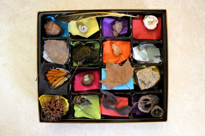 Chocolate Box Nature Collection - Repurpose your a chocolate box into a minature cabinet of curiousities for kids. Go on a nature walk and fill your box with treasures!