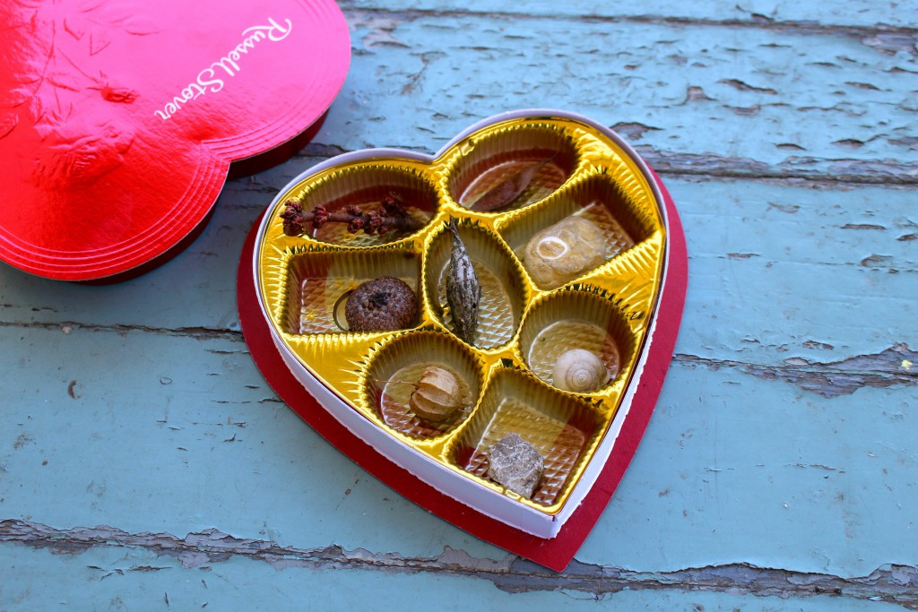 Nothing says 'Be Mine' like rocks and shells! Turn your Valentine's Day chocolate box into a nature collection for kids