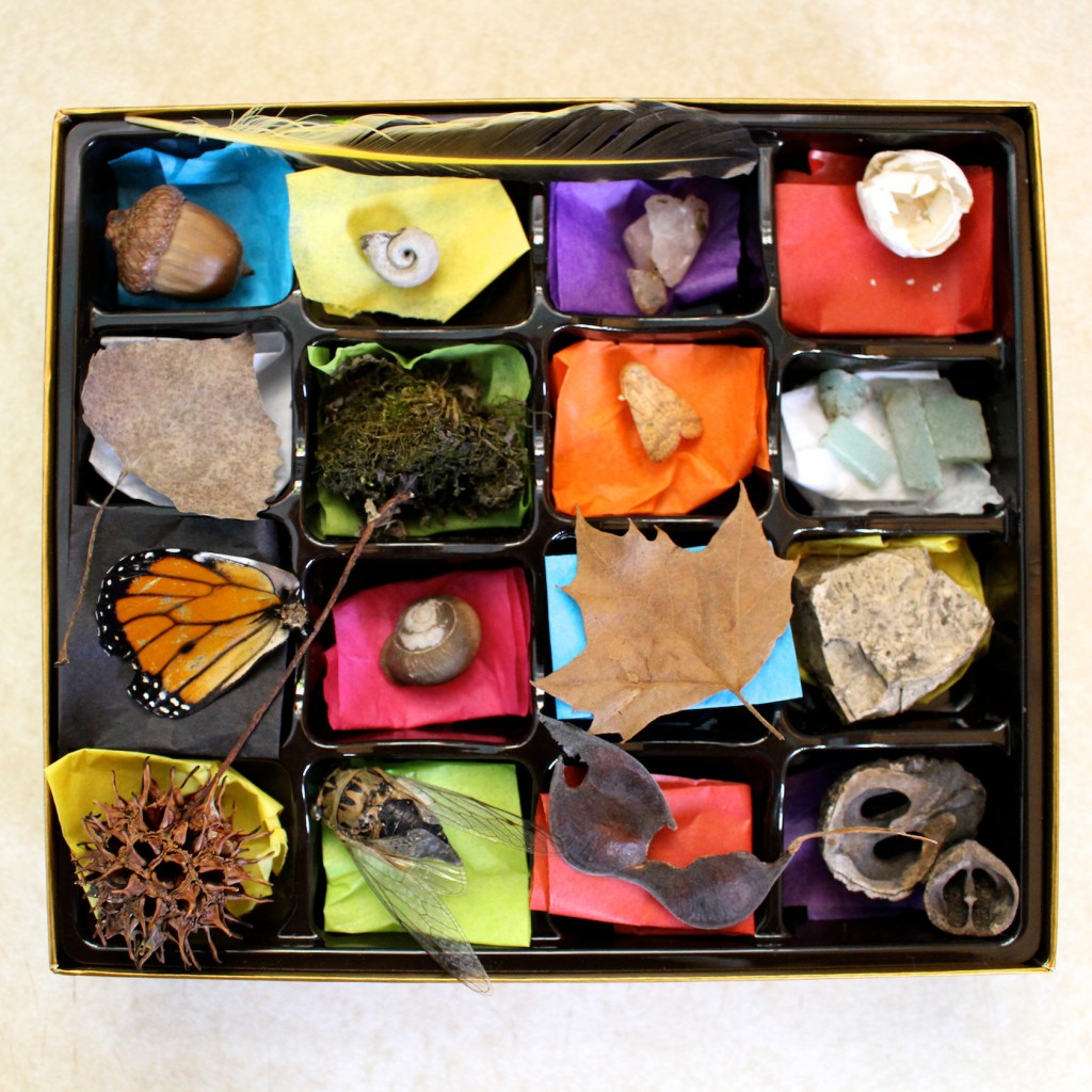 Chocolate Box Nature Collection - Repurpose your a Valentine's Day chocolate box into a minature cabinet of curiousities for kids. Go on a nature walk and fill your box with treasures