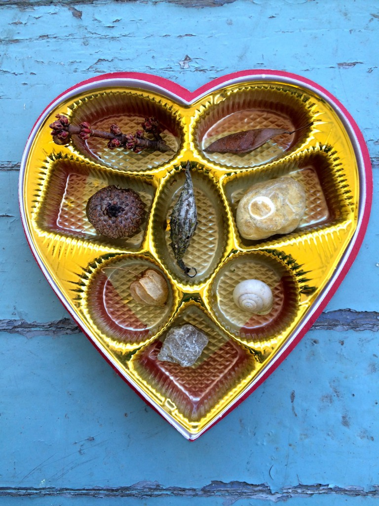 Turn your Valentine's Day chocolate box into a mini cabinet of curiosities for kids. Go on a nature walk and fill the box with small natural treasures