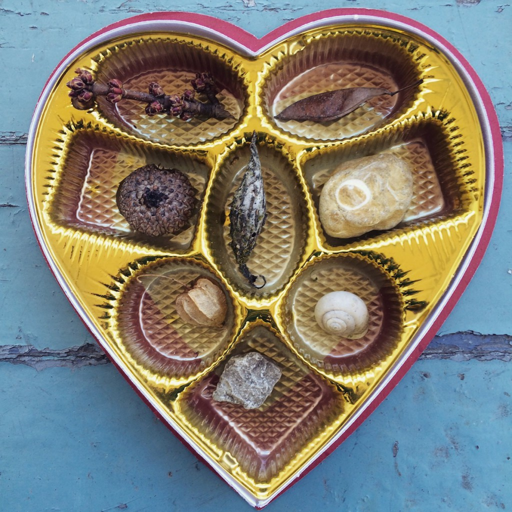 valentine's day nature chocolate box
