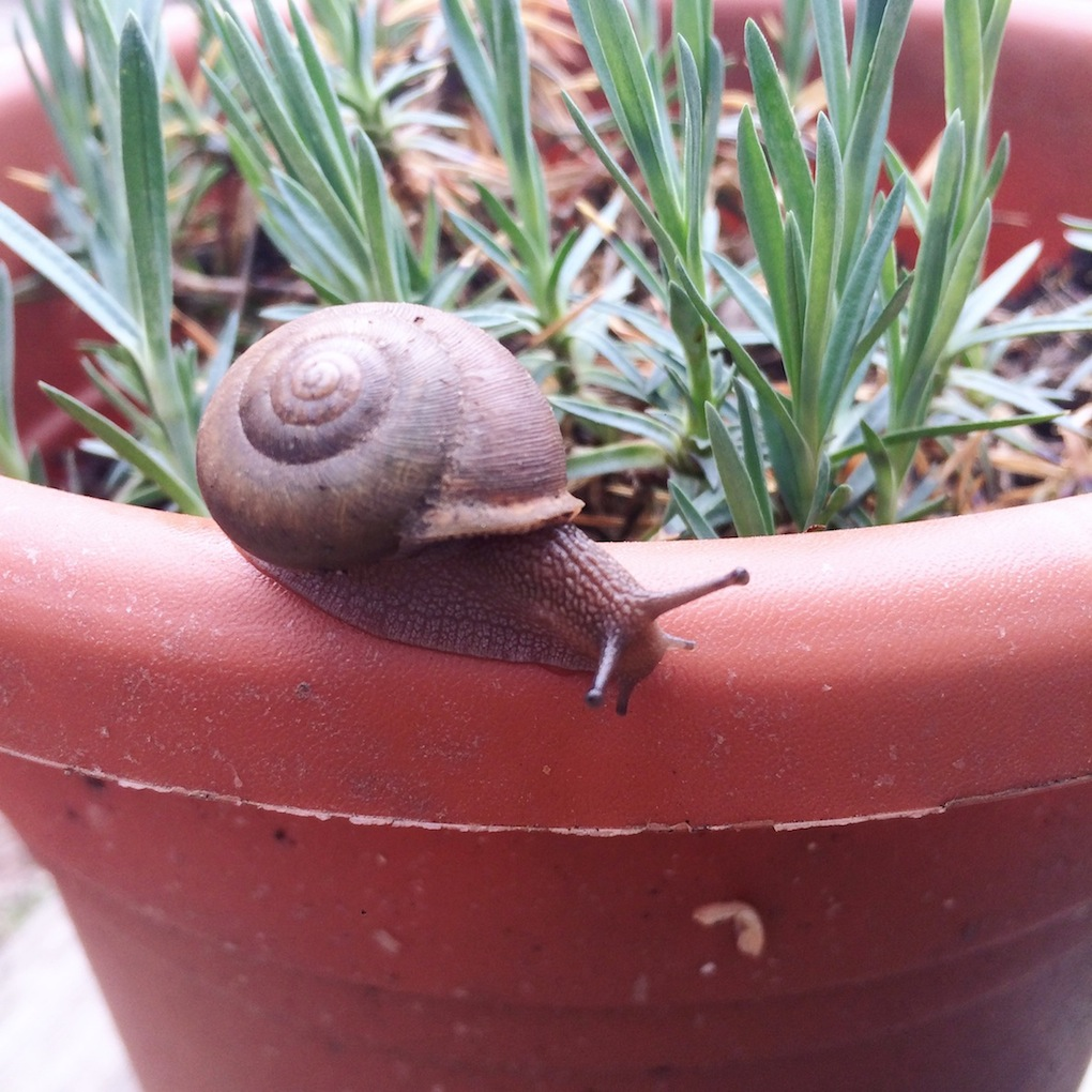 first snail sighting