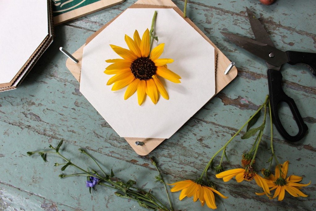 Flower pressing nature activity for kids