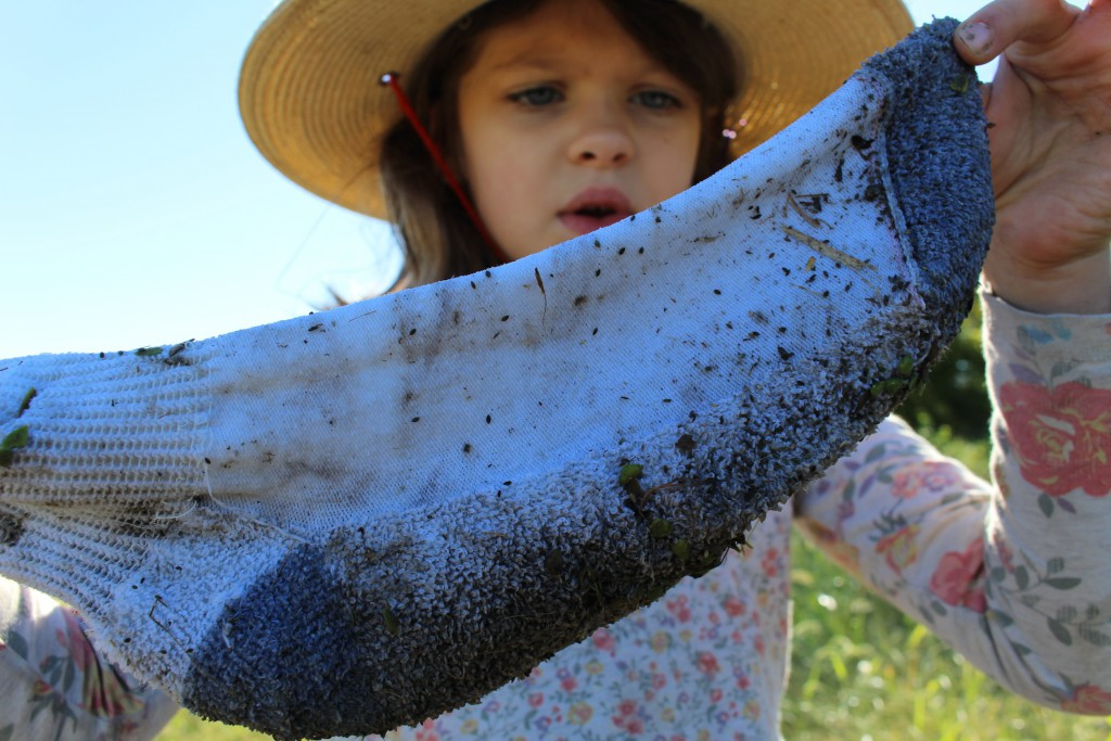 Take a sock walk this autumn for seed finding fun